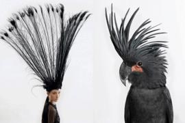 去哪里找服装设计作品集灵感?