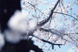 申请必备!日本五大顶级院校写真专业考试要求&内容汇总